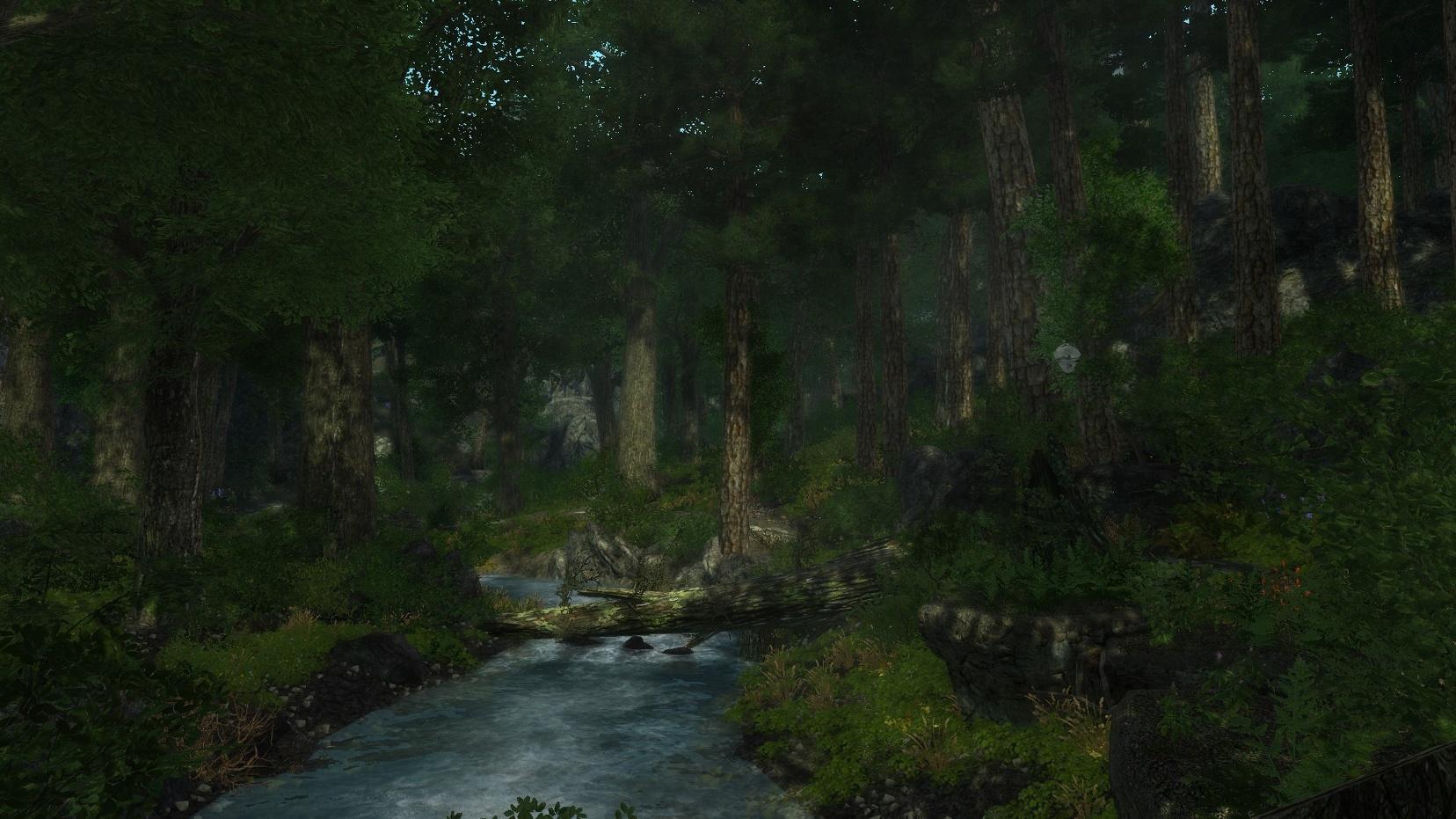 Enderal - Ein Wald