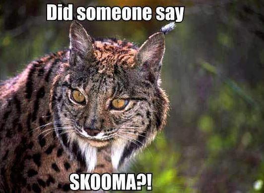 SKOOMA CAT SKOOOOOMA