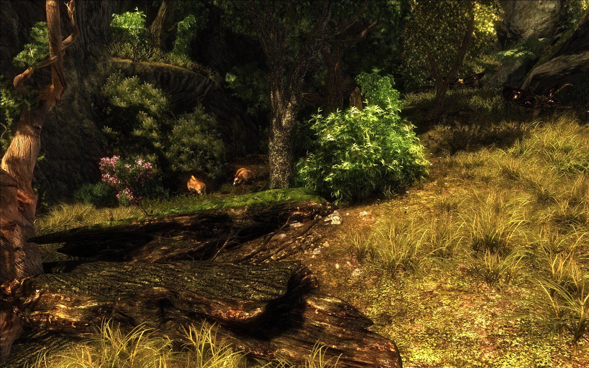 risen-neuland-wald-wildschweine