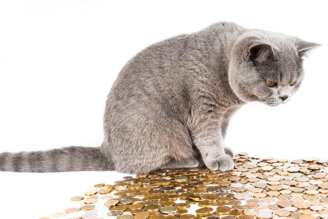 Eine graue Katze sitzt auf einem Haufen von Münzen. Interessiert blickt die Karte auf die Geldmünzen unter sich.